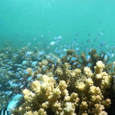 Après trois mois sans intervention humaine : découverte sur la Culture des coraux